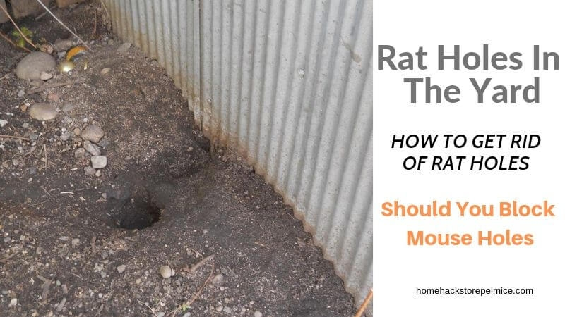 8 Pics Rat Burrows In Garden And View - Alqu Blog