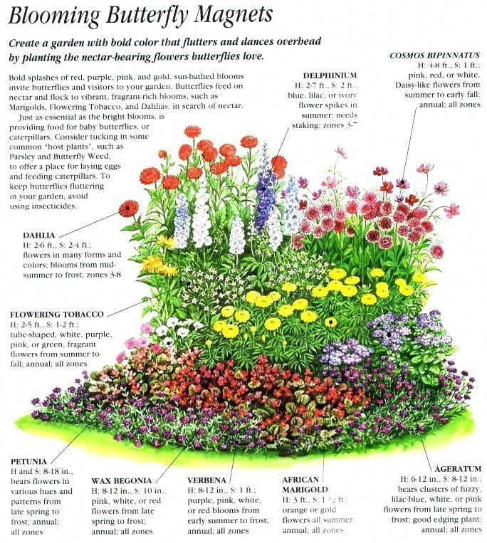 8 Pics Perennial Garden Designs For Zone 3 And Review ...